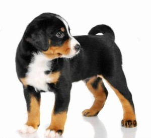 shchenok_gross-zennenhunda