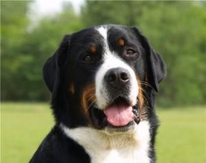 Bolshoi-zenenhund-foto